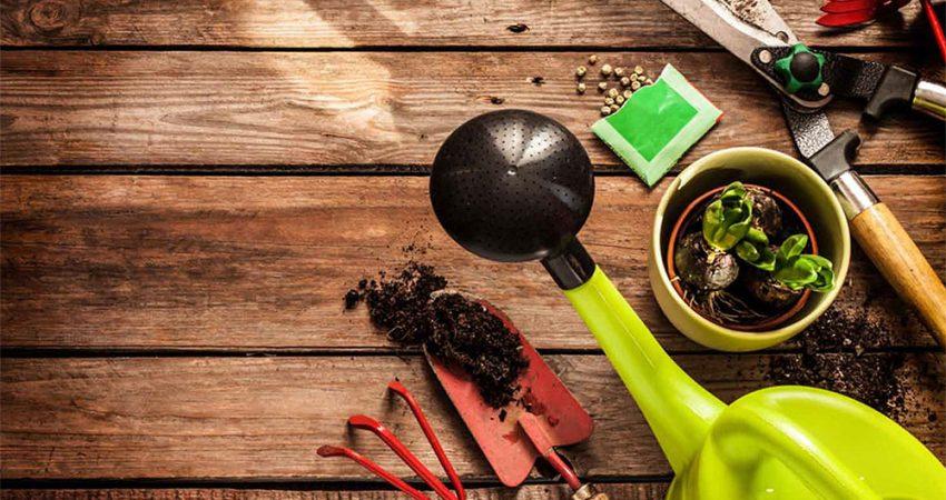 O que plantar/semear durante o Verão