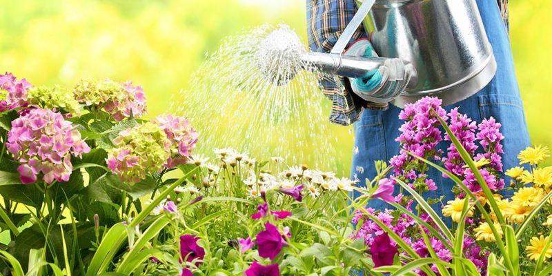 Horto do Campo Grande - 7 tarefas para cuidar ado jardim no Verão