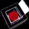Flower Cube_Rosa preservada