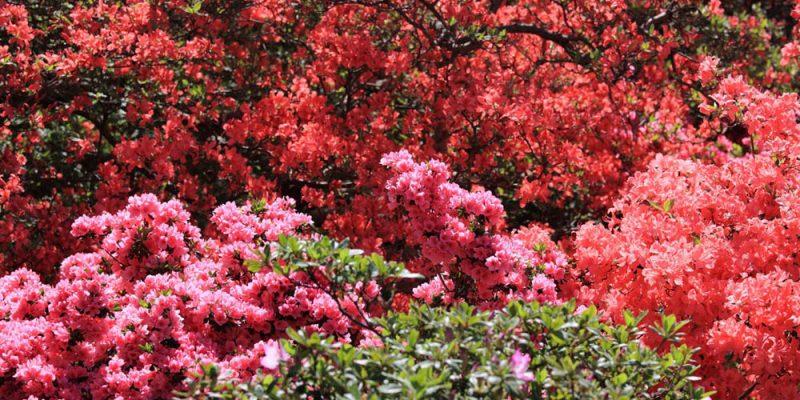flores de inverno