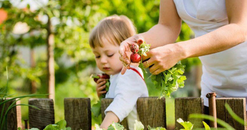 Horto do Campo Grande - Saladas frescas para o Verão