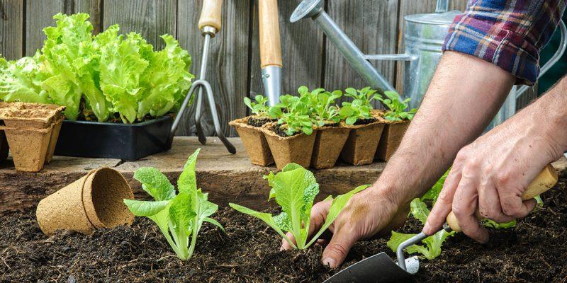O que plantar/semear no Outono