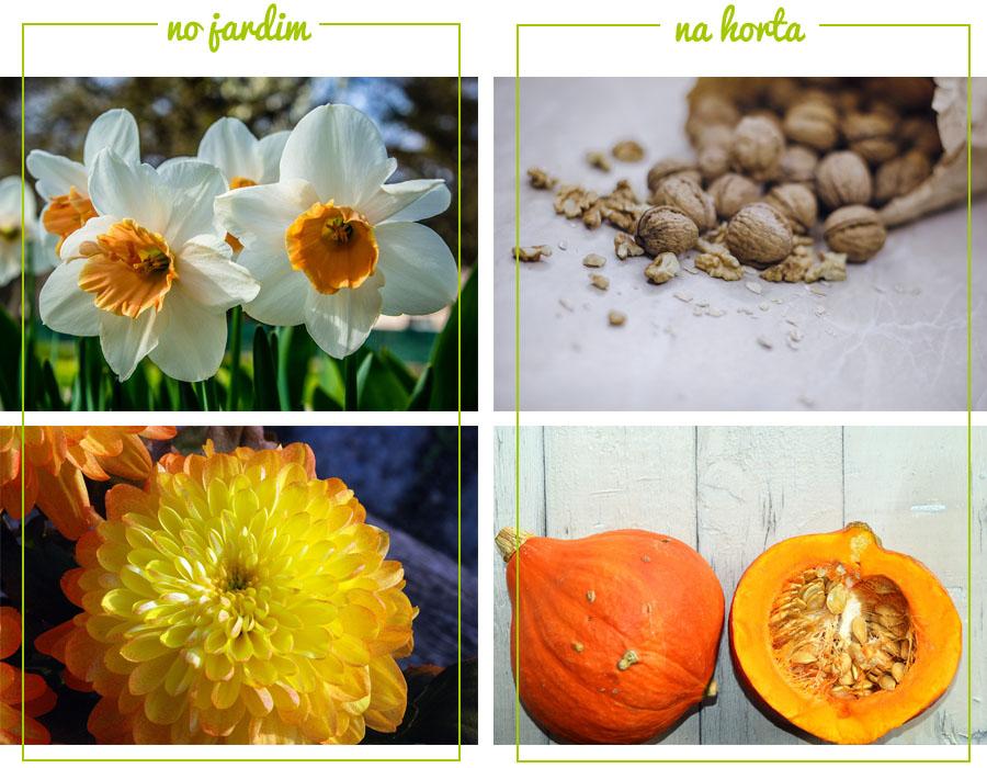 O que plantar/semear em Outubro