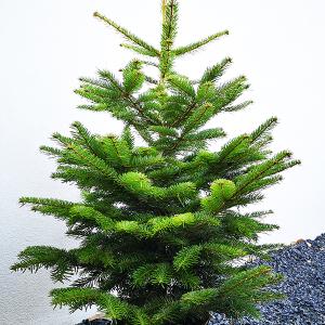 Árvore de Natal Natural