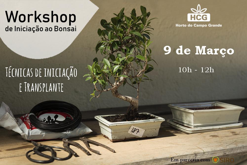 Workshop de Bonsais