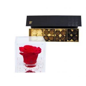 Trufas Chocolate Premium
