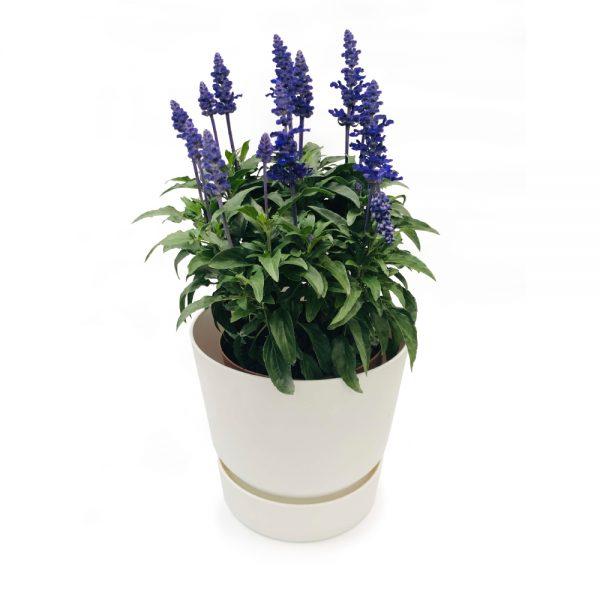 Planta Aromática em Vaso Elho