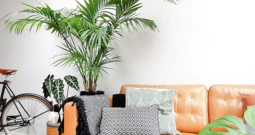 4 plantas que fazem bem à saúde!
