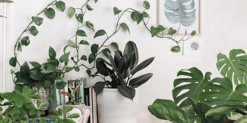 Urban Jungle – 5 plantas para recriar esta tendência na decoração