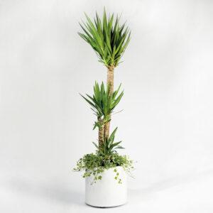 Floreira cilíndrica - Fibra de vidro Branca - Yucca