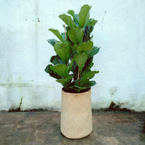 Vaso YARA, Bohemian Collection, Bamboo + Ficus Lyrata