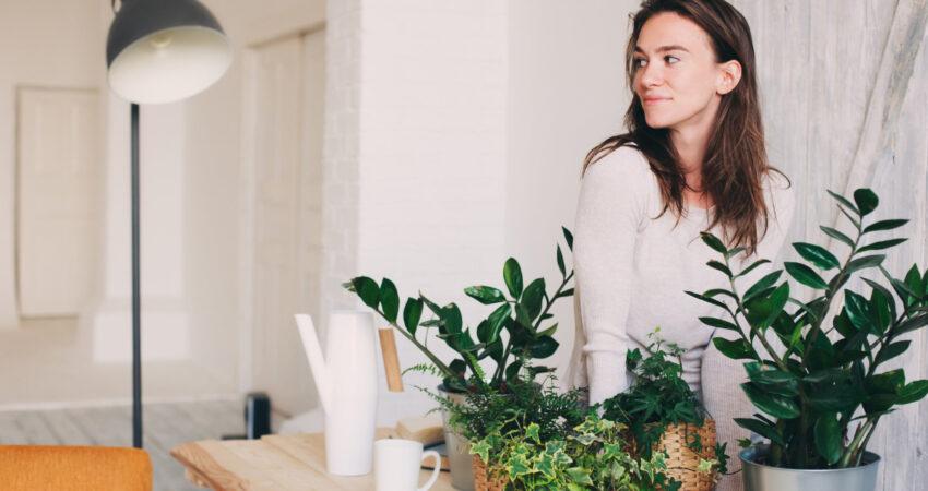 Cuidar de plantas é um desafio? Descubra 5 opções de fácil manutenção