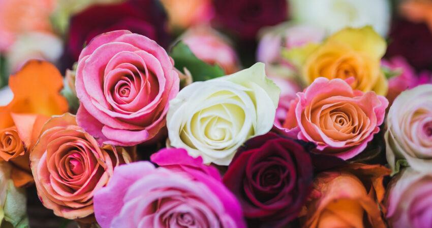 Saiba o significado das cores das rosas na hora de oferecer flores