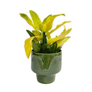 Vaso vidrado com Croton