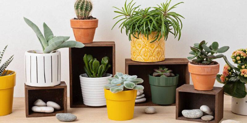 Baby Plants Celebrar a Primavera com Plantas Bebés