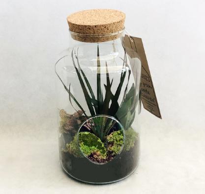 Garrafa com Plantas de interior