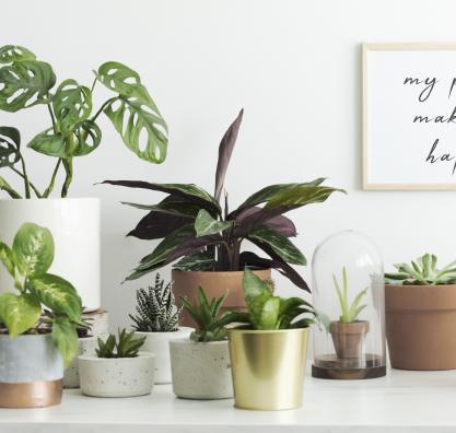 Plantas baby e suculentas diversas