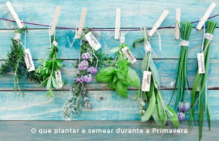O que plantar e semear durante a Primavera