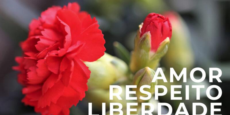 Conheça tudo sobre Cravos, as flores de Portugal