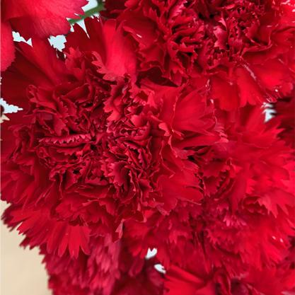 Ramo de Cravos vermelhos