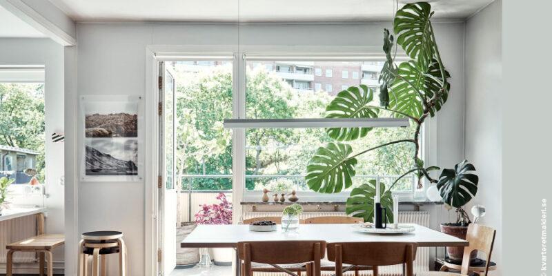 Plant Care – Monstera: Saiba como cuidar de uma das plantas mais trendy